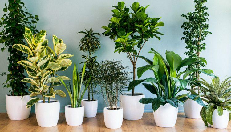 Prozdrowotne Rośliny Doniczkowe Które Warto Mieć W Domu Karodos